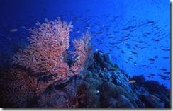 Reef Scene